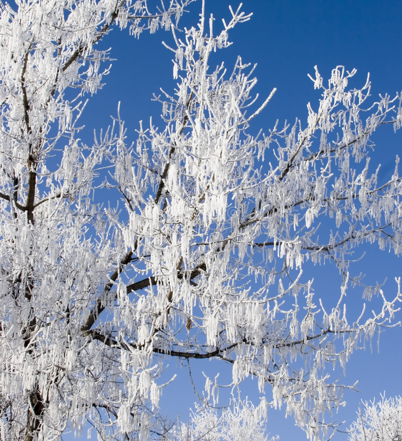 Hoar Frost 4. Hoar frost on bare tree branches royalty free stock photos