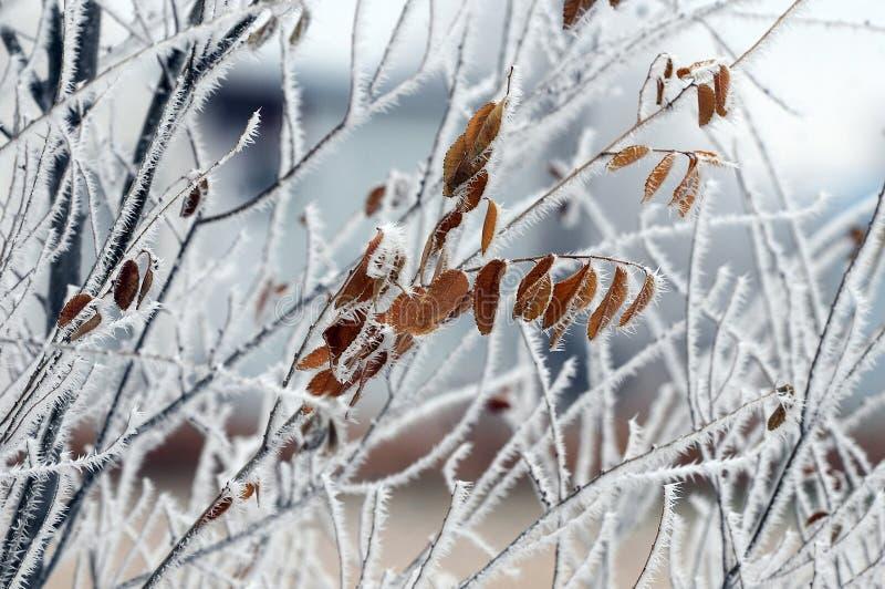 Hoar Frost fotos de stock