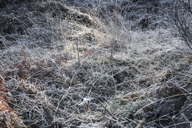 Illuminated Hoar Frost. Hoar frost covering the grasses around Glenfinnan Viaduct in Argyll, Scotland royalty free stock image