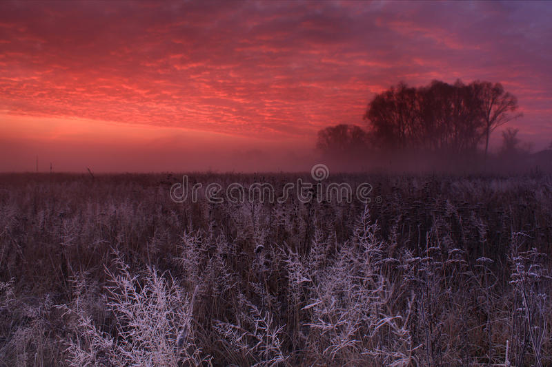 Hoar frost at dawn. Hoar frost covered grass at dawn in the woods royalty free stock image