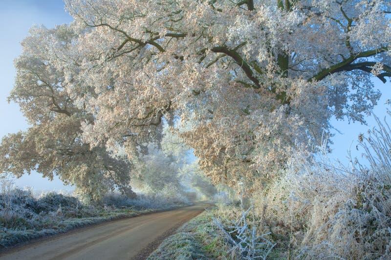 Hoar frost, England. Hoar frost on Oak tree, Gloucestershire, England stock images