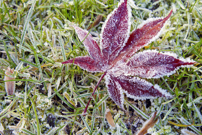 Hoar-frost On A Fallen Leaf Royalty Free Stock Image