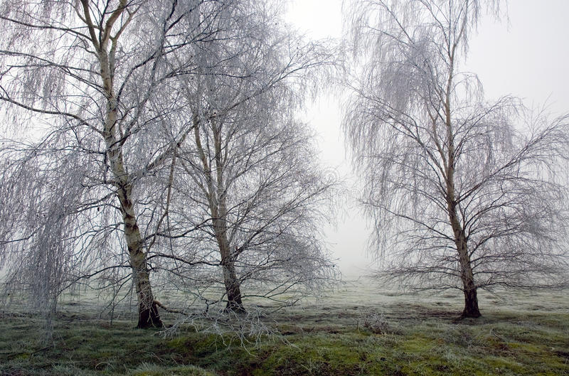 Hoar-Frost gefrorene Suppengrün in Wortham Ling Diss Norfolk stockfotografie
