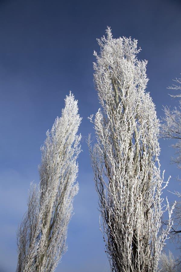 Hoar-Frost-Grasland lizenzfreie stockbilder