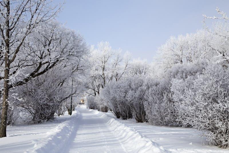 Hoar-Frost-Grasland stockfotografie