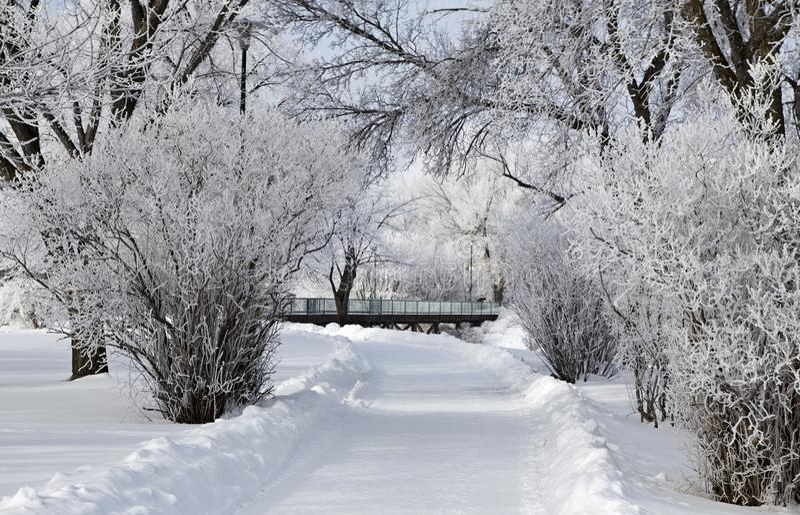 Hoar-Frost-Grasland stockfotos