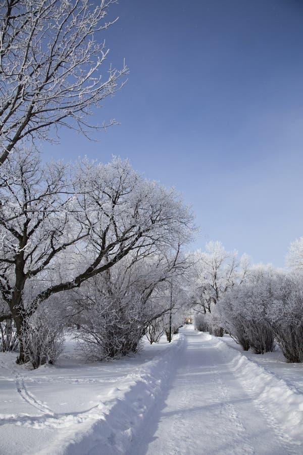Hoar-Frost-Grasland stockbilder