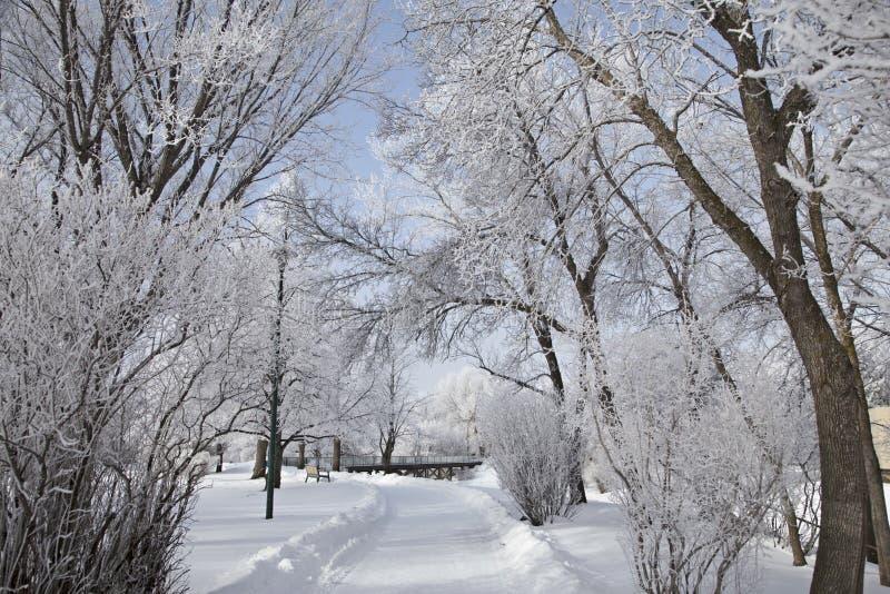 Hoar-Frost-Grasland lizenzfreies stockbild