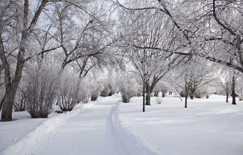 Hoar-Frost-Grasland lizenzfreies stockfoto