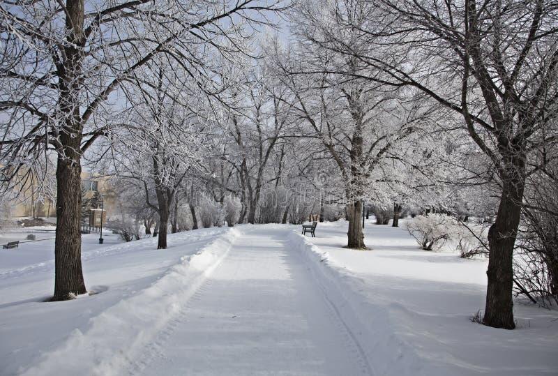 Hoar-Frost-Grasland stockbild