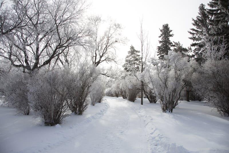 Hoar-Frost-Grasland lizenzfreie stockfotos