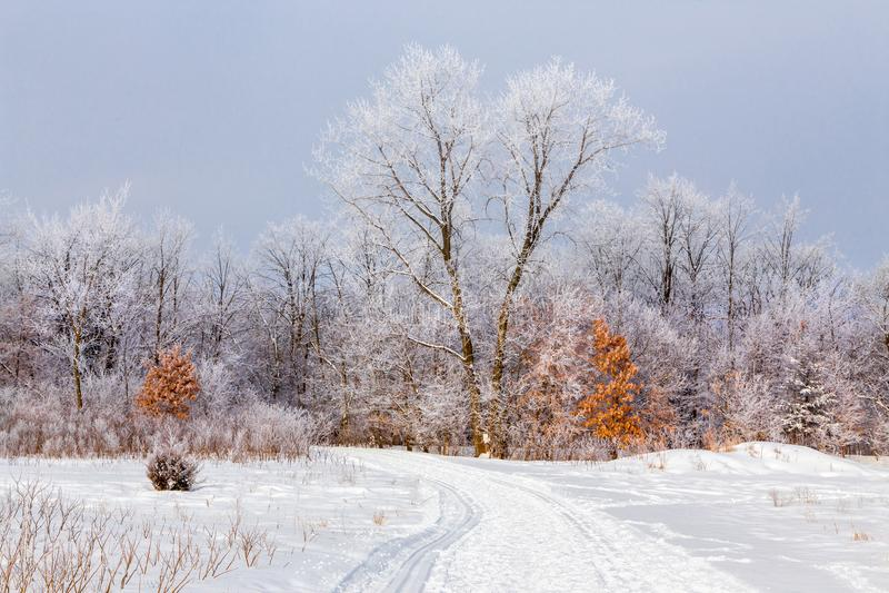 Hoar Frost im Laubwald lizenzfreies stockbild
