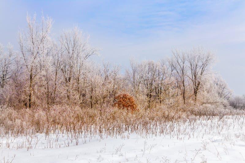 Hoar Frost im Laubwald lizenzfreie stockfotografie