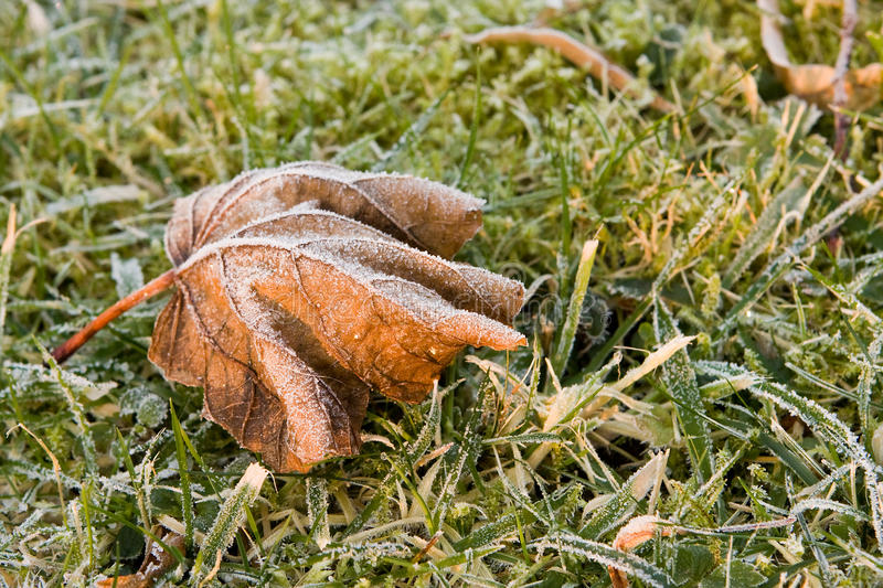 Download Hoar Frost On Leaf Stock Photos - Image: 15567483