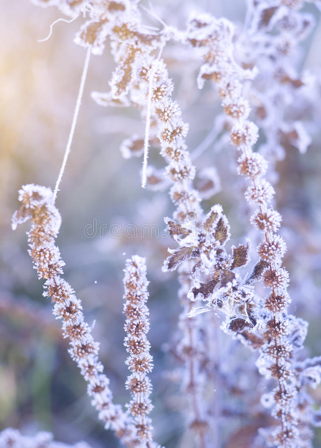 Download Hoar frost on the plants stock photo. Image of natural - 22467890