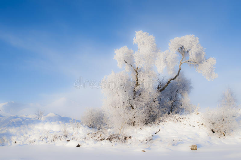Hoar frost on tree. A soft look for this tree covered by hoar frost. Taken at Black mount Scotland royalty free stock images
