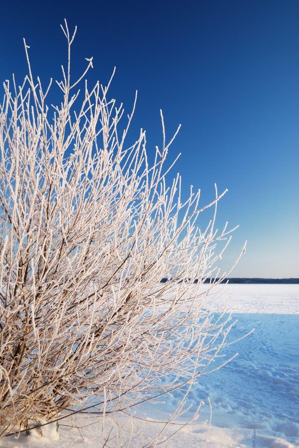 Hoar Frost On Tree Stock Photos