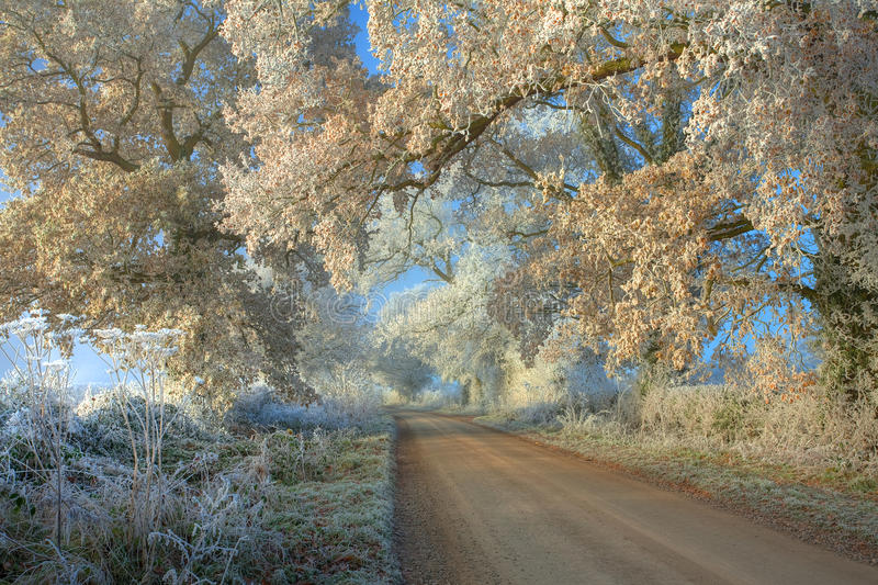 Hoar frost on trees. Rural lane with Oak trees covered in Hoar frost, Gloucestershire, England stock image