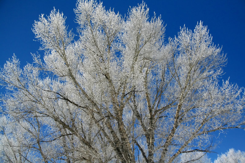 Download Hoar frost on  trees stock image. Image of aspens, branches - 4718821