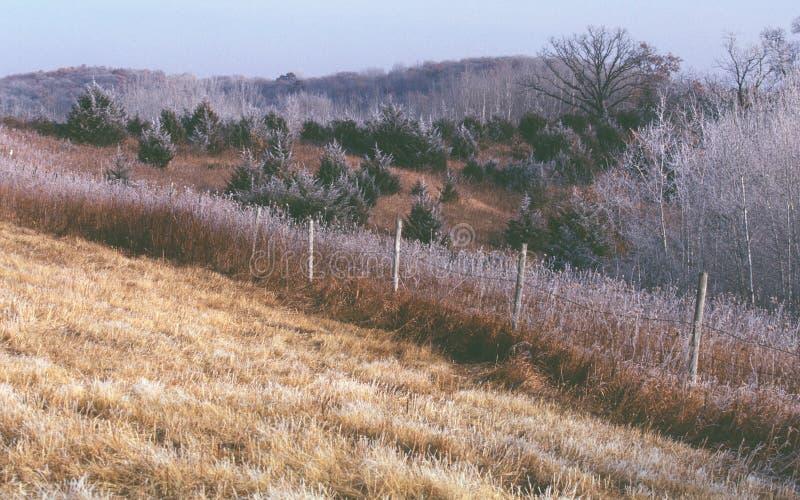 Hoar mróz lś w trawach wczesna wiosna i drzewach obraz royalty free