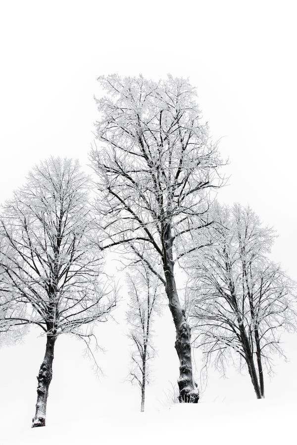 hoar nadzy mrozowi drzewa obraz royalty free