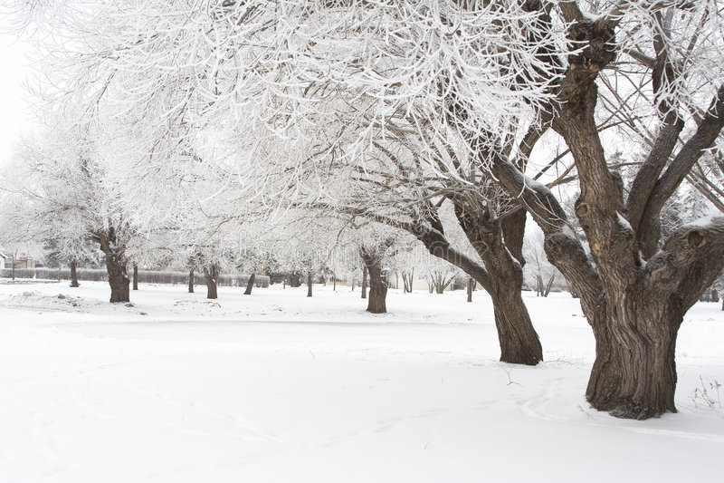 Hoar vorst 3 van de winter stock fotografie