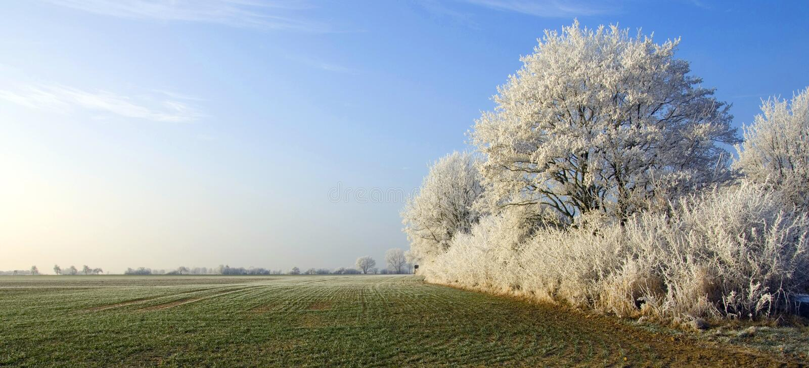 Hoar winter landscape. On a very cold day with clear blue sky as background royalty free stock image