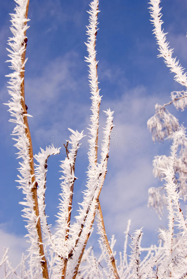 Hoar On Winter Tree Branches Stock Images