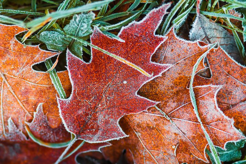 Hoarfrost στα φύλλα Φύση πριν από το χειμώνα Σχέδιο Νοεμβρίου Δημιουργικά παγωμένα φύλλα φύσης Υπόβαθρο φύσης φθινοπώρου στοκ φωτογραφίες