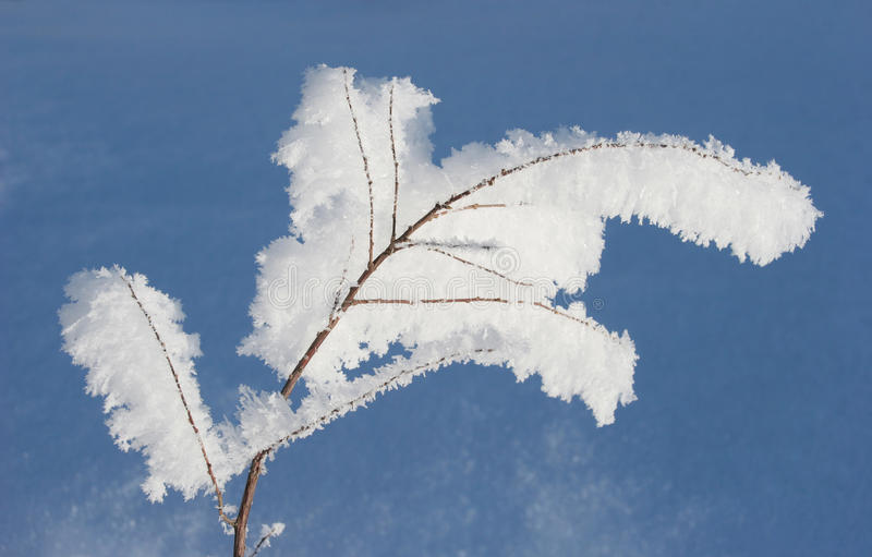 Hoarfrost royalty free stock photos
