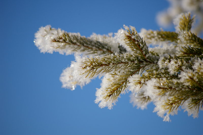 Hoarfrost stock photo