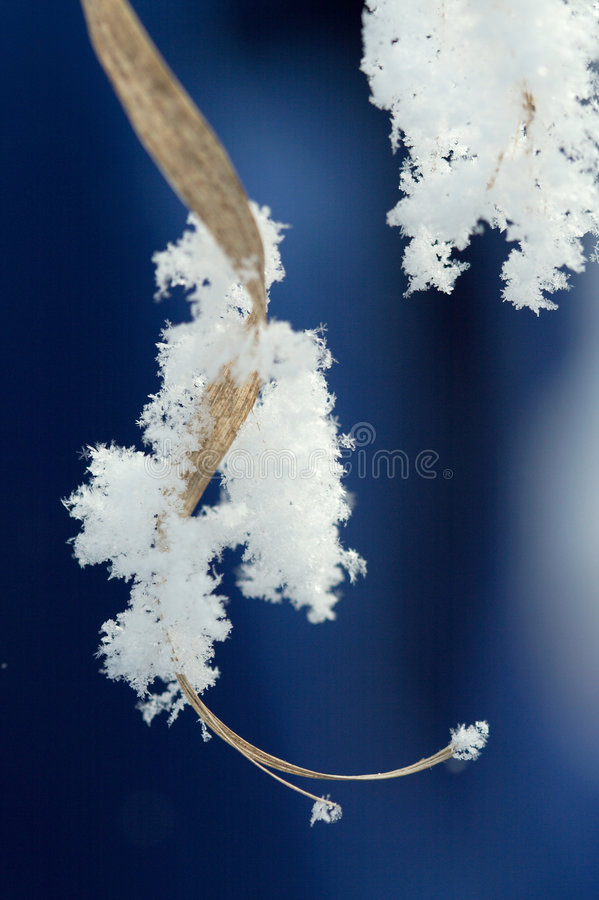 Download Hoarfrost Stock Photo - Image: 7640770