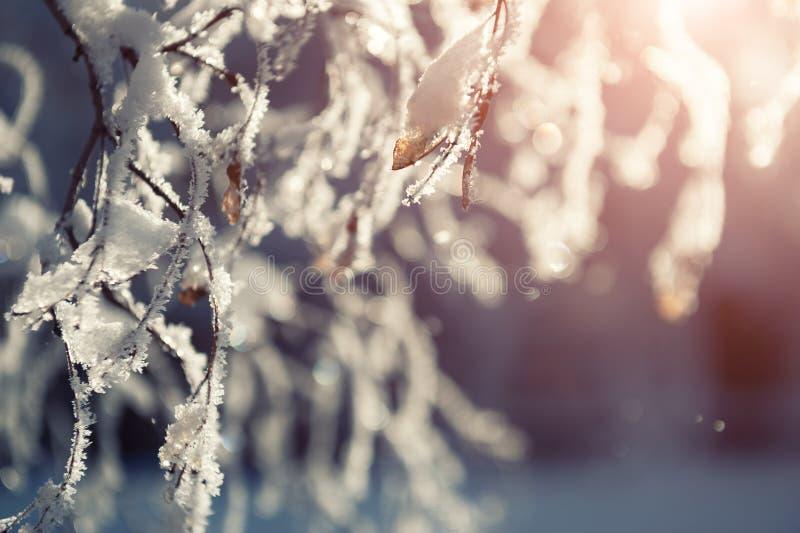 Hoarfrost auf den Bäumen im Winterwald lizenzfreie stockfotografie