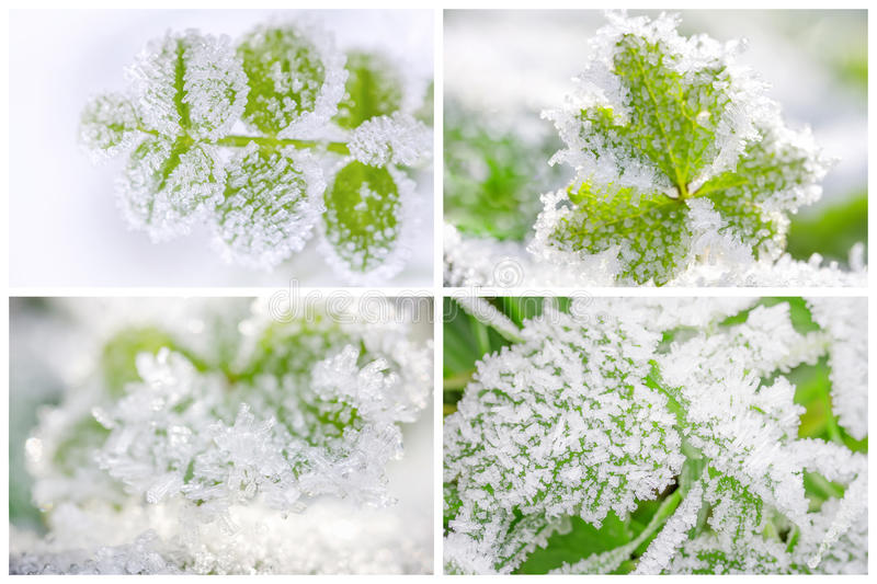 Hoarfrost on leaves. Thematic business card set or visiting card set. Hoarfrost on leaves royalty free stock photography