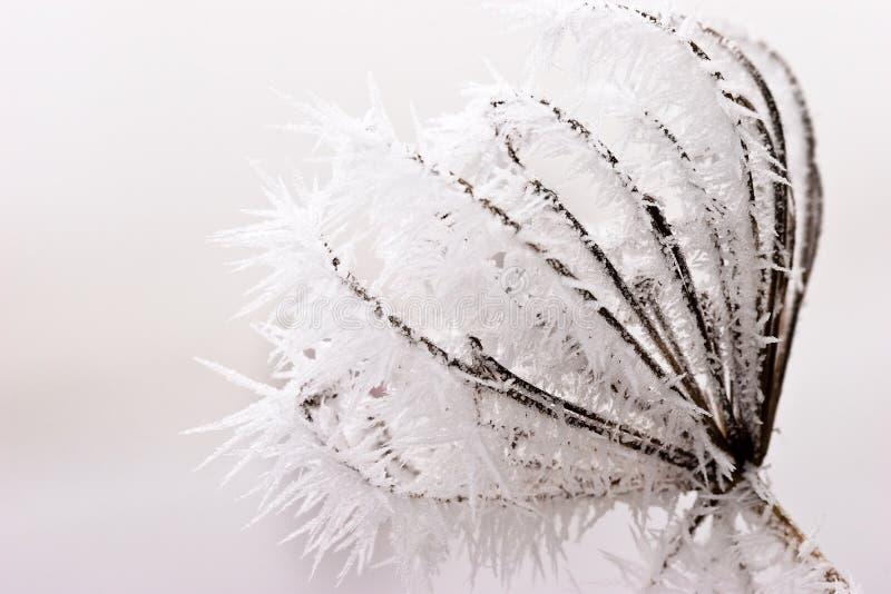 Hoarfrost oder weicher Raureif auf Anlagen an einem Wintertag stockfotos