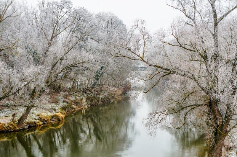 Hoarfrost på träd som fodrar Donauen nära Regensburg, Tyskland arkivbild