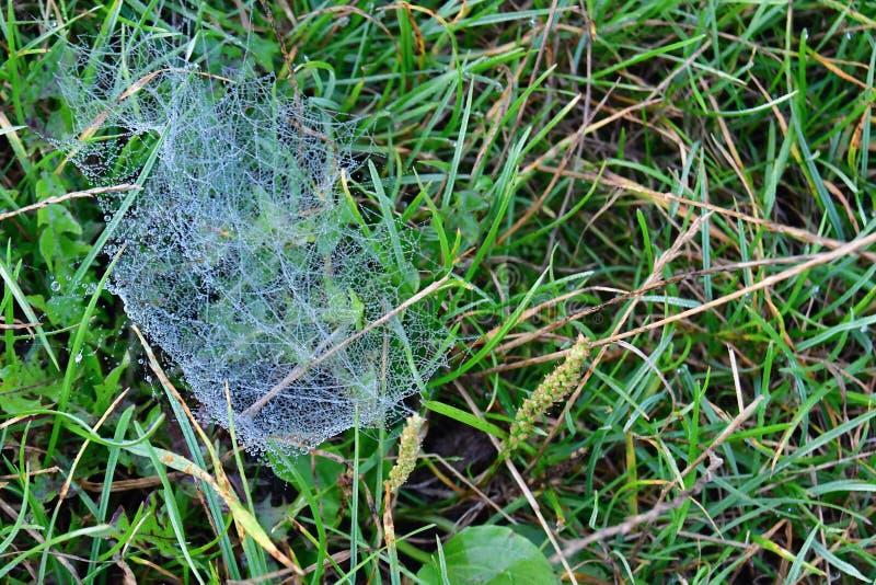 Hoarfrost sur une toile d'araignée images libres de droits