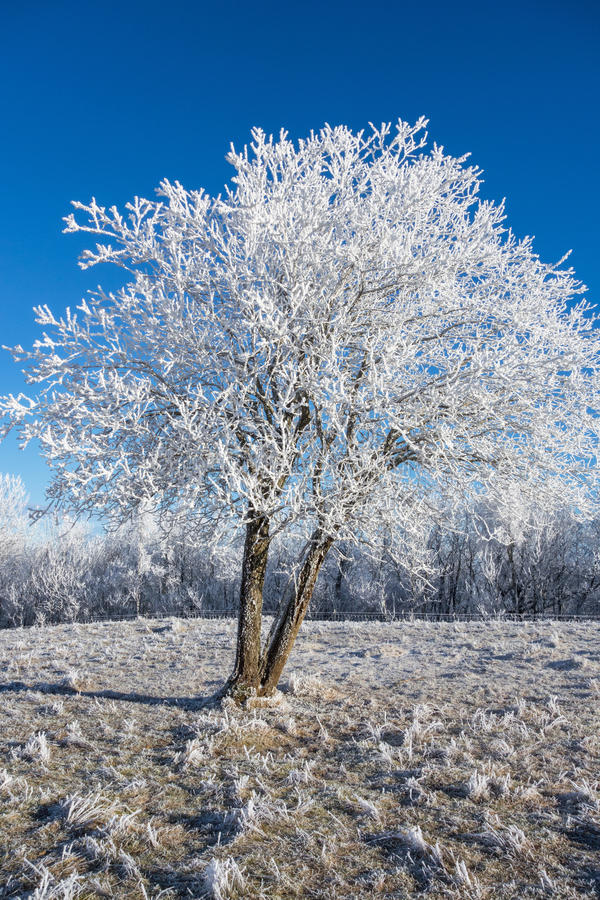 Hoarfrost zakrywający drzewo obrazy stock