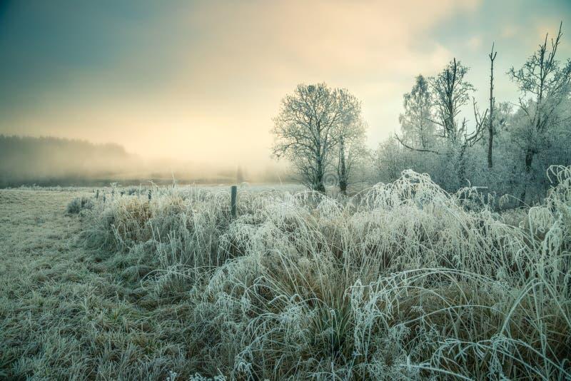 Hoarvorst en sneeuwlandschap royalty-vrije stock afbeelding