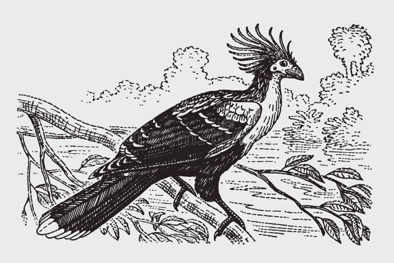 Hoazin do opisthocomus de Hoatzin que senta-se em um ramo ilustração royalty free