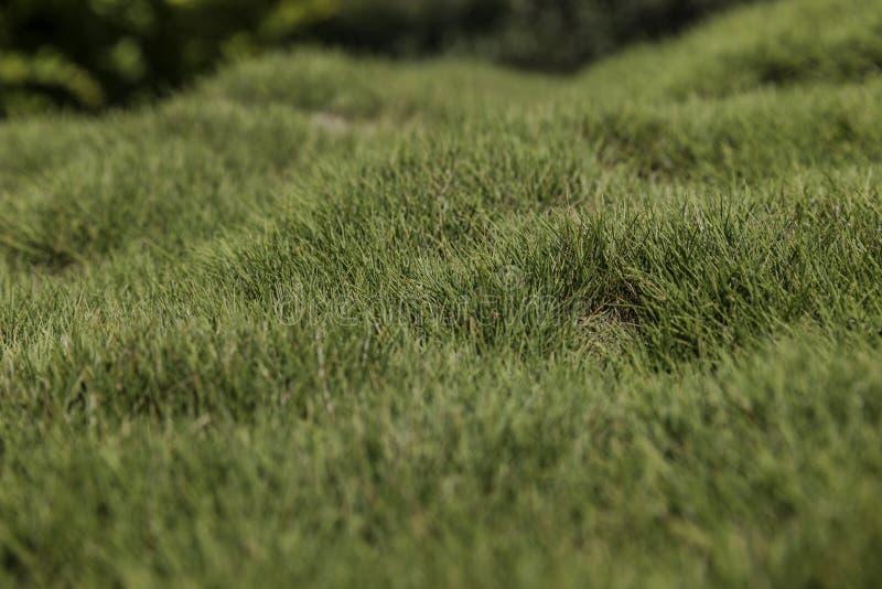 Hobbelig groen gras royalty-vrije stock afbeeldingen