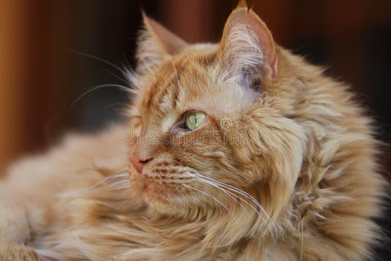 Hobbes die Katze lizenzfreies stockfoto