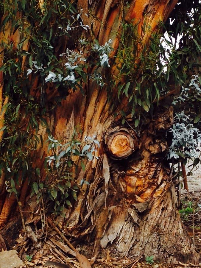 Hobbit树 库存图片