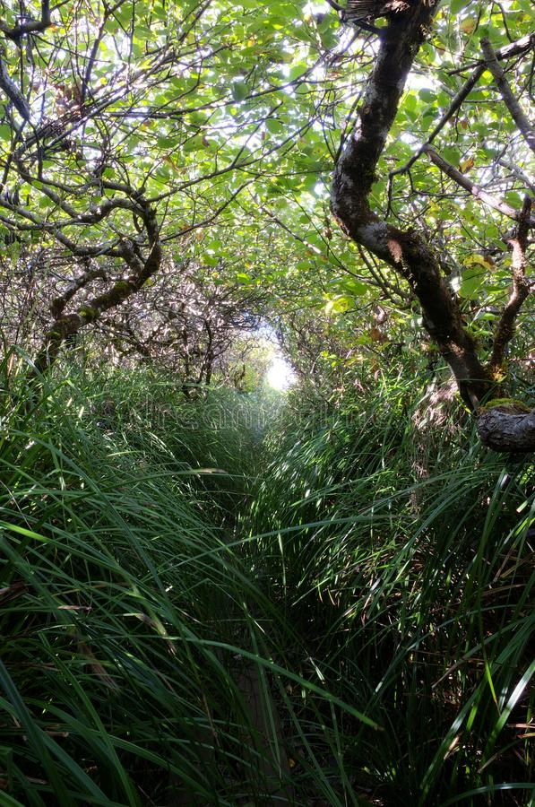 Hobbit trail through brush. royalty free stock images