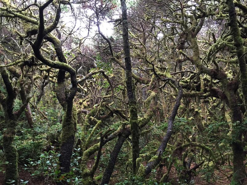 Hobbit Trail stock photography