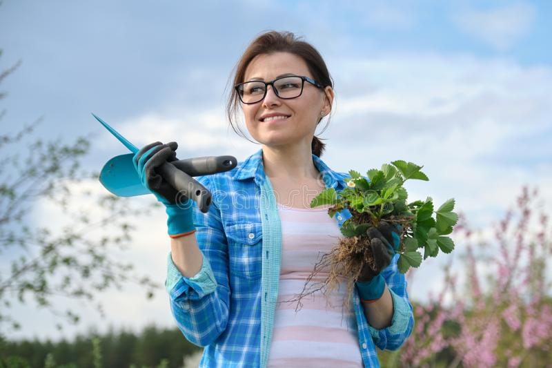 Female in gloves with garden tools holding strawberry bush royalty free stock photography