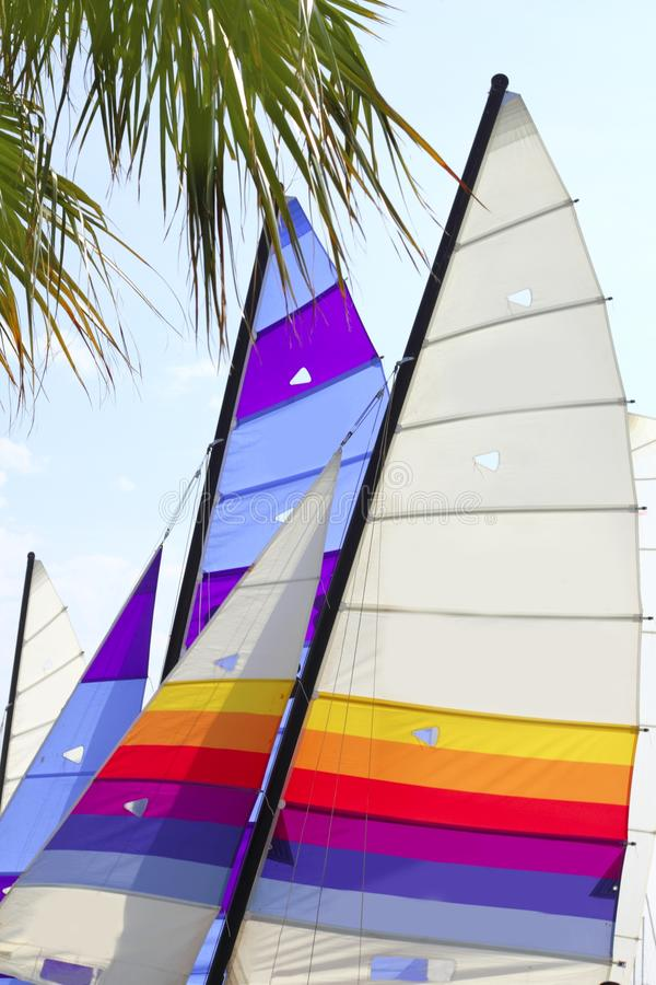 Hoby hobby cat colorful sails palm tree leaf stock photos