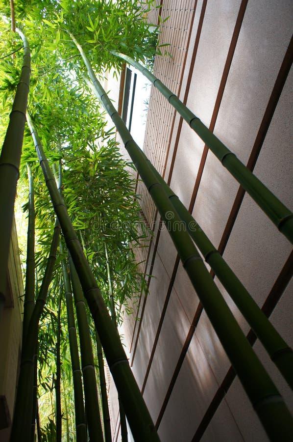 Hochfliegender Bambus stockfotografie