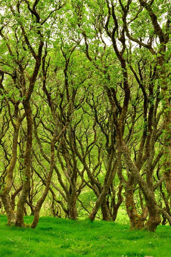 Hochländer von Schottland-Landschaft, grüner Wald lizenzfreies stockfoto