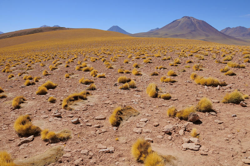Hochlandlandschaft in Atacama-Wüste zur Tageszeit lizenzfreie stockfotografie